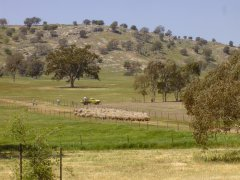 Hovells Creek farmland.jpg