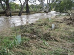 Kooringle flood 60.jpg