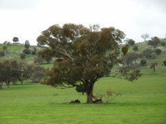 Landcare-Field-Days-016.jpg
