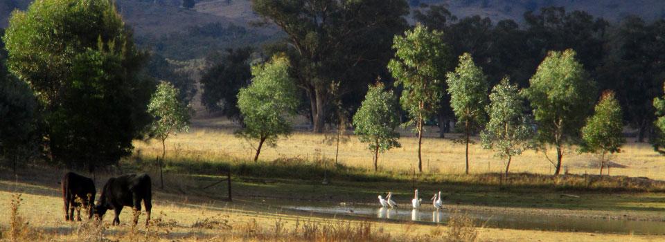 pelicans-on-dam-3.jpg
